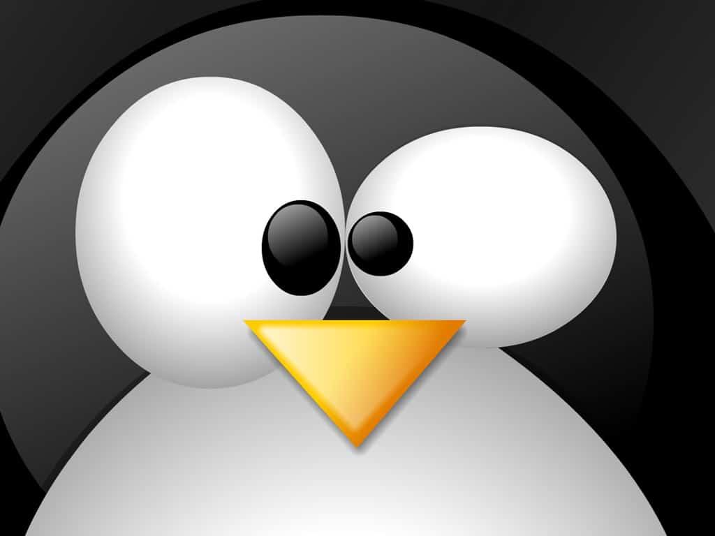 Bons hábitos que todo usuário Linux deve conhecer