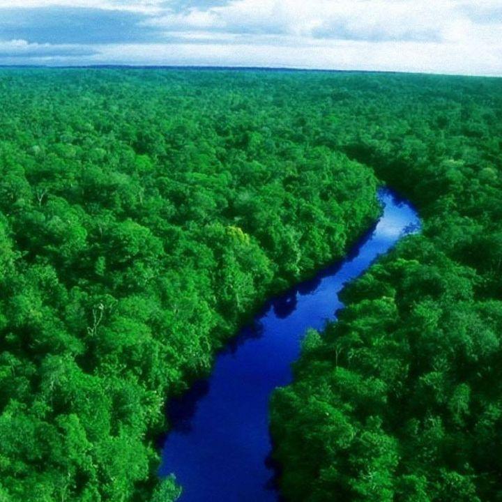 facebook-tenta-impedir-a-venda-de-terras-da-floresta-amazonica-em-sua-plataforma